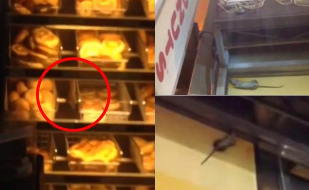 Rats chowing down at New York Dunkin Donuts
