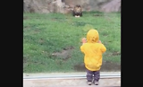 Lion at Japan zoo tries to paw Boy through Glass