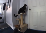 Cat helps dog escape