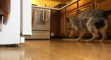 Murphy running into oven
