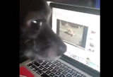 Dirty Dog Caught Online