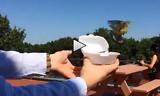 Bird Rescue Release Fail